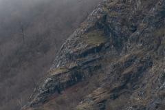 Mountain Goat Terrain