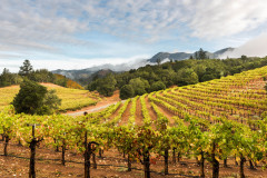 After the Rain, Sonoma County