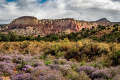 Ghost Ranch Asters