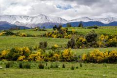 Kiwi Springtime