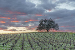 Sonoma Valley Sunset