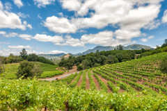 Knights Valley Vineyard