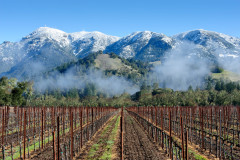 Mt. St. Helena Vines and Snow