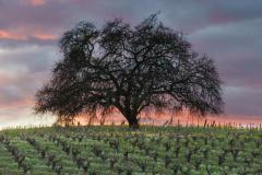 Sundown, Sonoma Valley