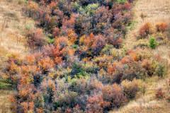 Washington Autumn