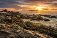 Stump Beach III