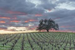 Sonoma Valley Sunset