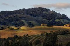 Sunlit Hills, Sonoma Valley